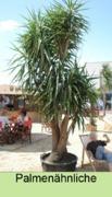 Palmenverleih