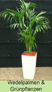 Pflanzenverleih