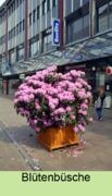 Rhododendron leihen